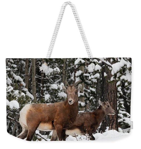 Bighorn Sheep In Deep Snow Weekender Tote Bag