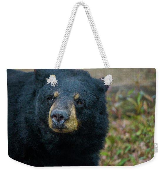 Black Bear In Deep Thought Weekender Tote Bag