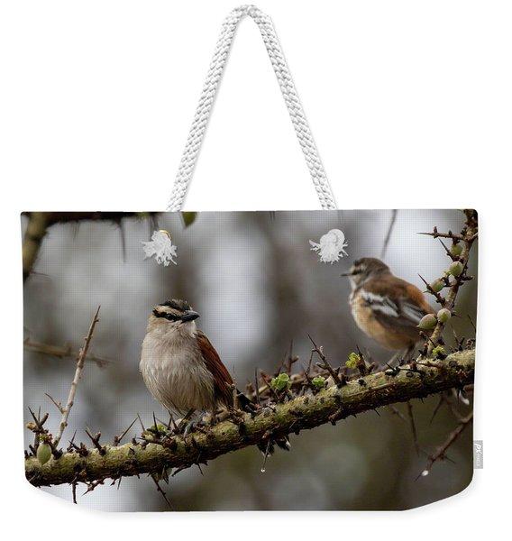 Black-crowned Tchagra And White-browed Scrub-robin Weekender Tote Bag