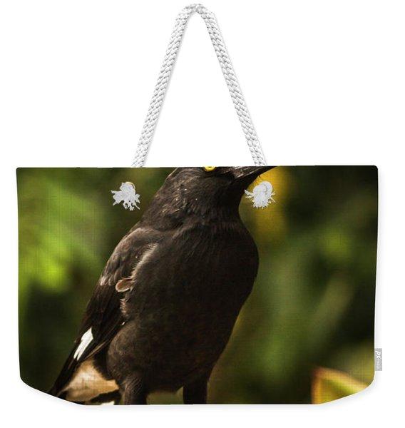 Black Currawong Bird Weekender Tote Bag