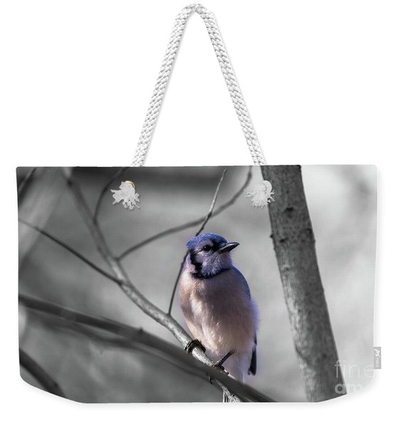 Weekender Tote Bag featuring the photograph Blue Jay by Dheeraj Mutha