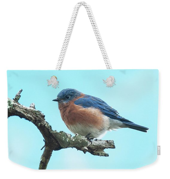 Blue On Blue Eastern Bluebird Weekender Tote Bag