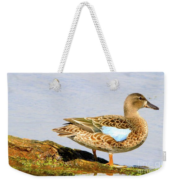 Blue-winged Teal Female Duck Weekender Tote Bag
