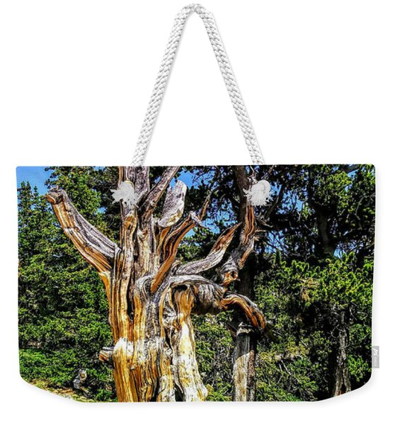 Weekender Tote Bag featuring the photograph Bristlecone1 2018 by Aaron Bombalicki