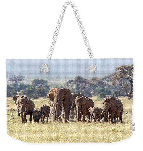 Bull Elephant With A Herd Of Females And Babies In Amboseli, Kenya Weekender Tote Bag