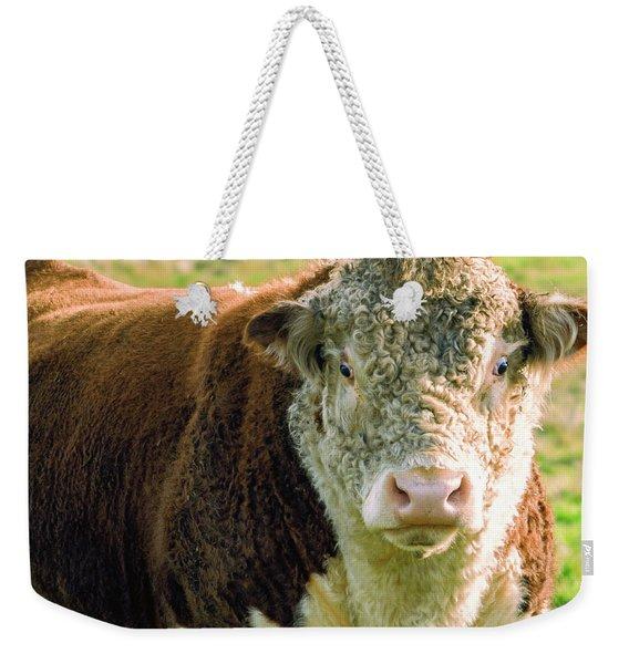 Bull In The Country Side Of Tasmania. Weekender Tote Bag
