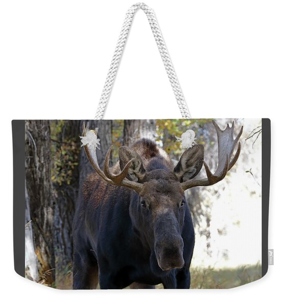 Bull Moose Approaching Weekender Tote Bag