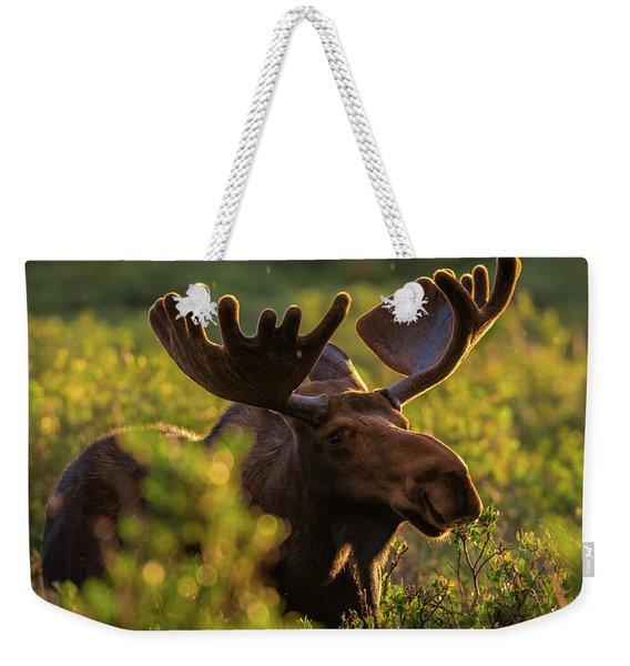 Bull Moose Enjoys A Light Sunrise Rain Weekender Tote Bag