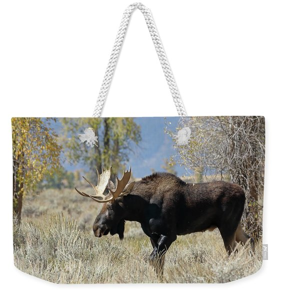 Bull Moose In Sage Weekender Tote Bag