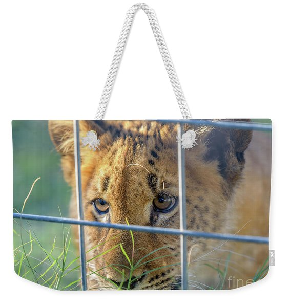 Weekender Tote Bag featuring the photograph Caged by Dheeraj Mutha