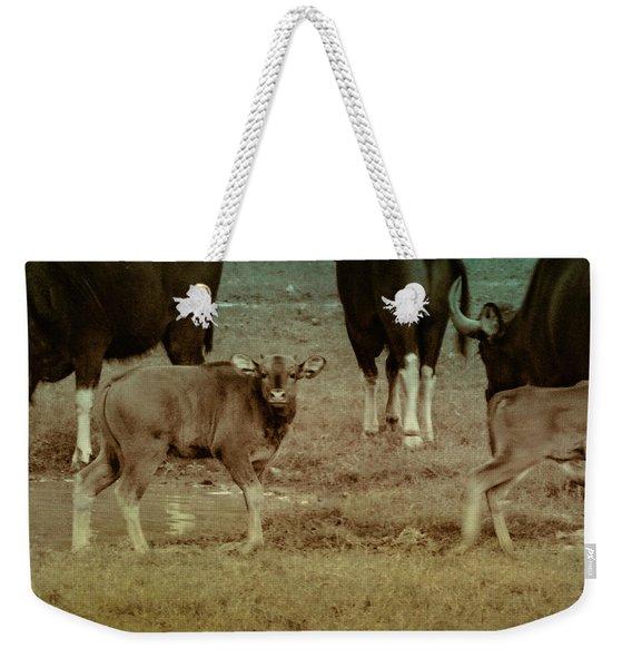 Calf Posing Weekender Tote Bag