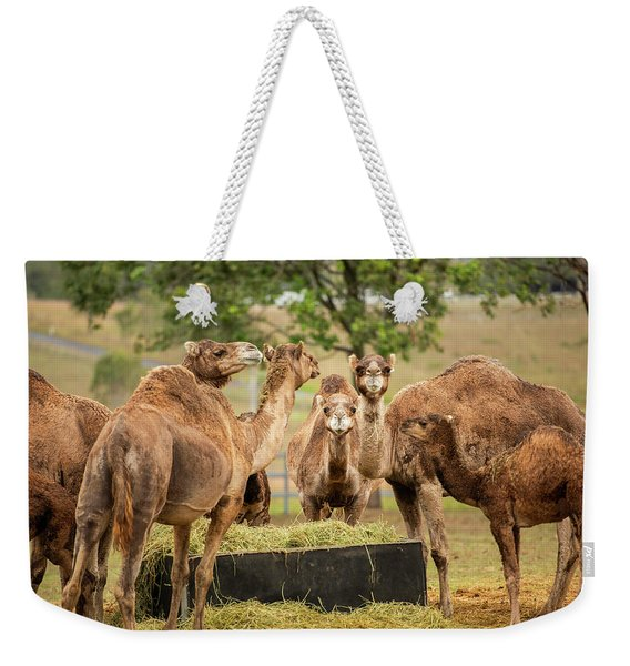 Weekender Tote Bag featuring the photograph Camels Out Amongst Nature by Rob D Imagery