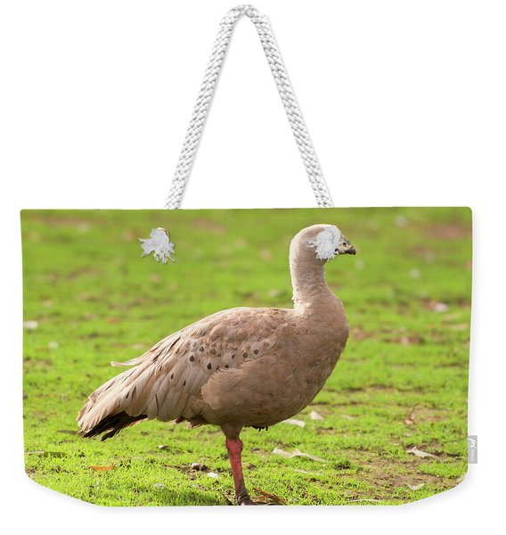 Cape Barron Goose Weekender Tote Bag