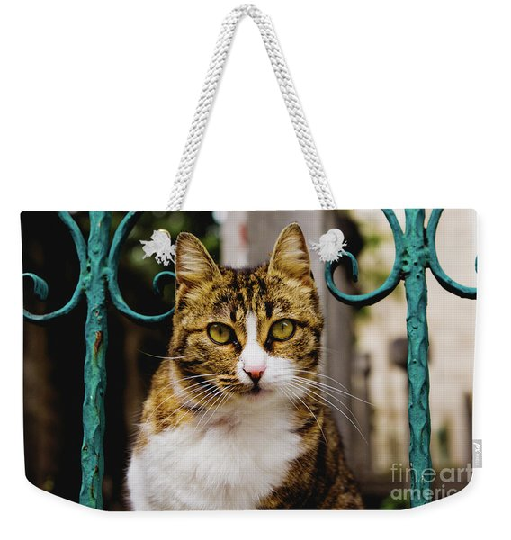 Cat On A Fence Weekender Tote Bag