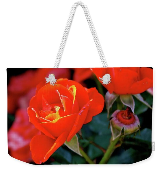 Catch The Morning Weekender Tote Bag