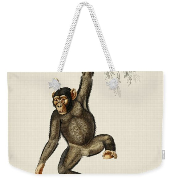 Chimpangze  Troglodyte Chimpanze Illustrated By Charles Dessalines D' Orbigny  1806-1876  Weekender Tote Bag