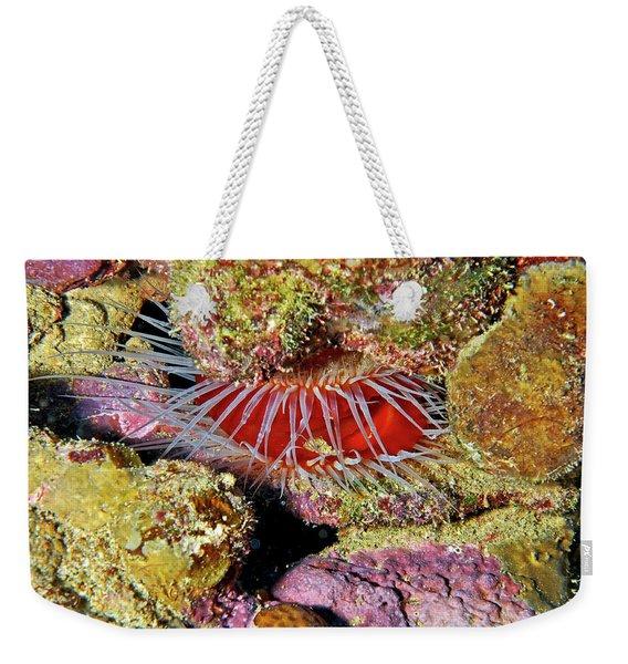 Clam Up Weekender Tote Bag