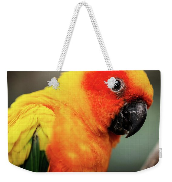 Close Up Of A Sun Conure Parrot. Weekender Tote Bag