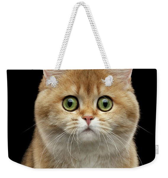 Close-up Portrait Of Golden British Cat With Green Eyes Weekender Tote Bag