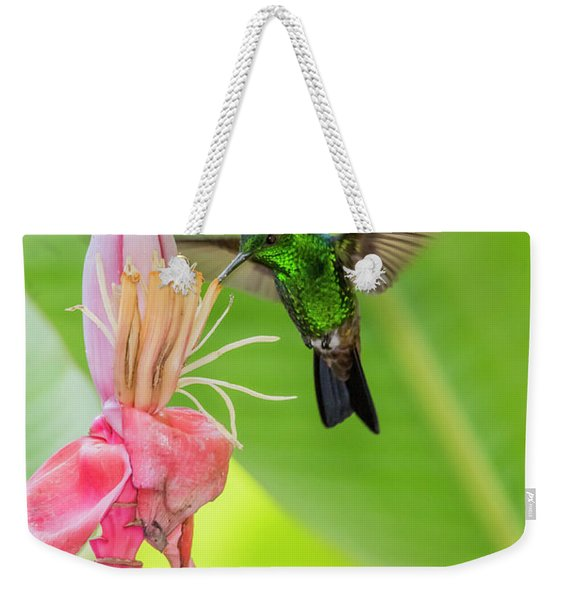 Weekender Tote Bag featuring the photograph Copper Rumped Hummingbird Feeds On A Banana Flower by Rachel Lee Young