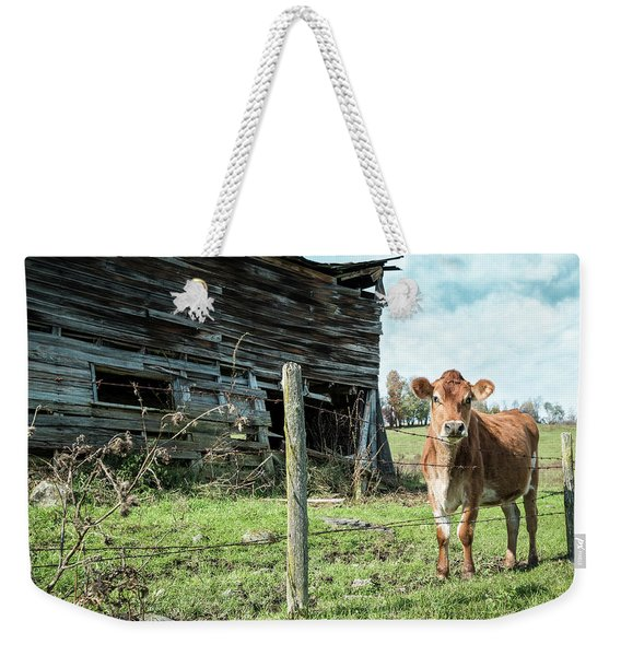 Cow By The Old Barn, Earlville Ny Weekender Tote Bag