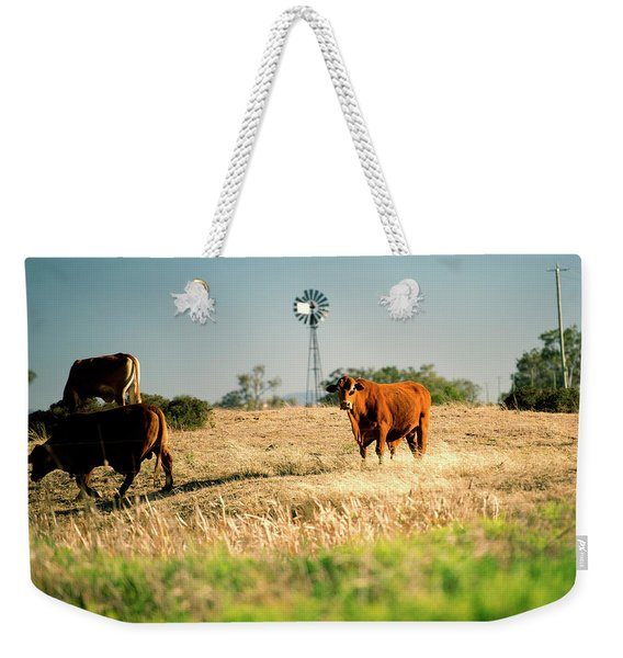 Weekender Tote Bag featuring the photograph Cows And A Windmill In The Countryside. by Rob D Imagery