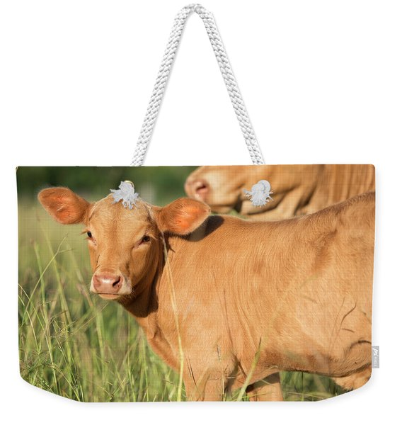Weekender Tote Bag featuring the photograph Cute Calf by Rob D Imagery