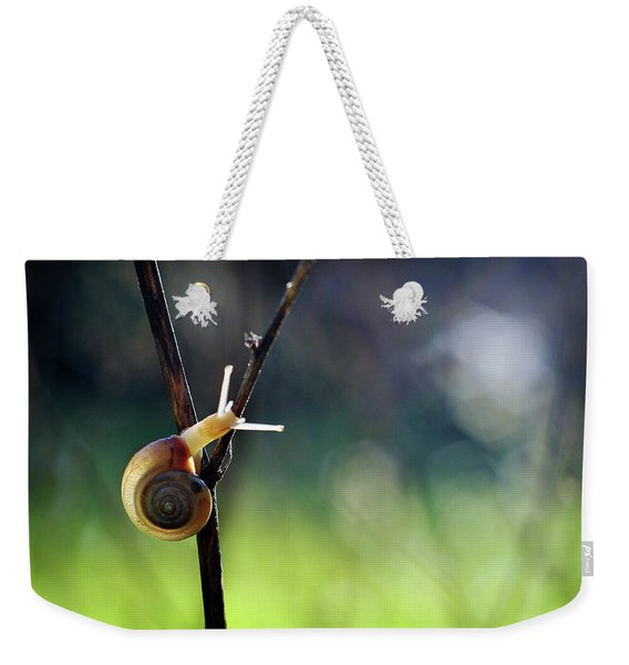Weekender Tote Bag featuring the photograph Cutie Pie by Michelle Wermuth
