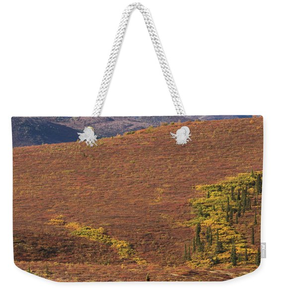 Weekender Tote Bag featuring the photograph Denali Grizzly by Tim Newton