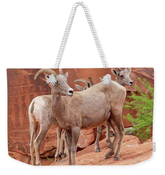 Desert Bighorns Weekender Tote Bag