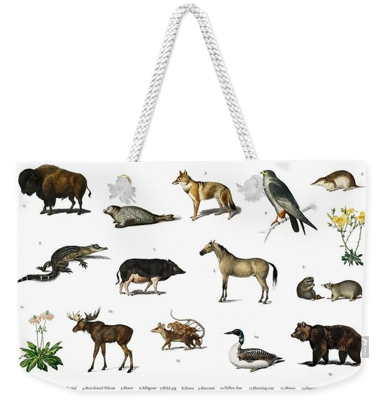 Different Types Of Animals Illustrated By Charles Dessalines D' Orbigny  1806-1876  Weekender Tote Bag