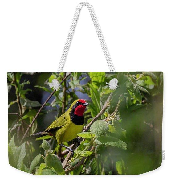 Doherty's Bushshrike Weekender Tote Bag