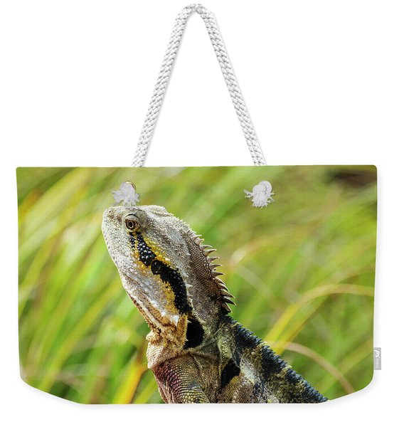Weekender Tote Bag featuring the photograph Eastern Water Dragon Lizard by Rob D Imagery