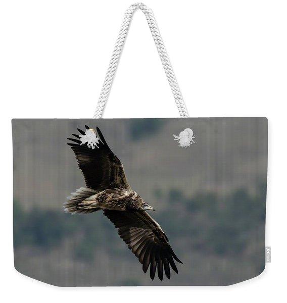 Egyptian Vulture, Sub-adult Weekender Tote Bag