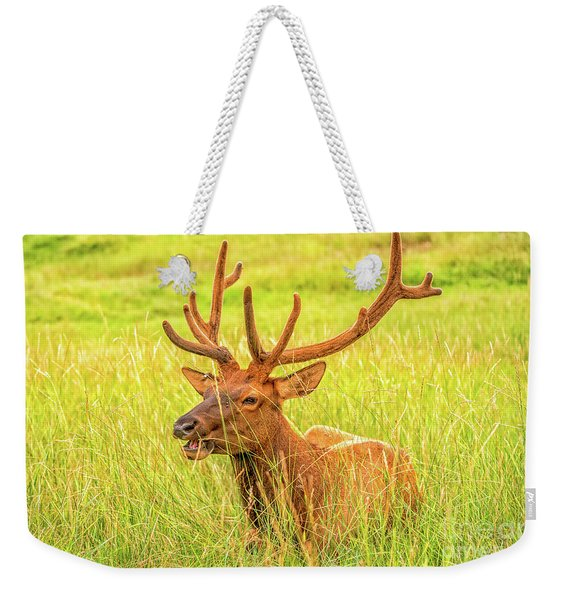 Weekender Tote Bag featuring the photograph Elk by Dheeraj Mutha