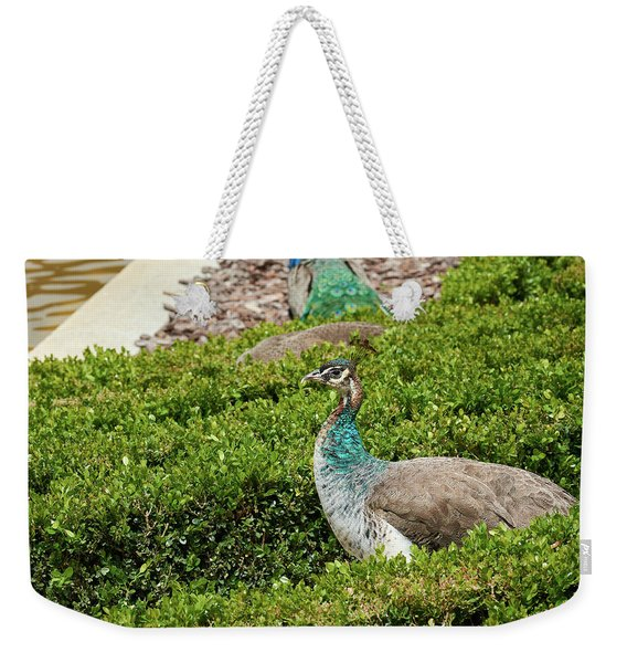 Female Peafowl At The Gardens Of Cecilio Rodriguez In Madrid, Spain Weekender Tote Bag