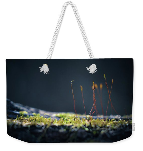 Weekender Tote Bag featuring the photograph Follow by Michelle Wermuth