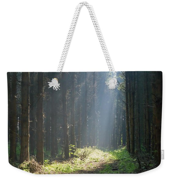Weekender Tote Bag featuring the photograph Forrest And Sun by Anjo Ten Kate