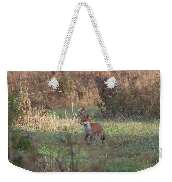 Fox On Prowl Weekender Tote Bag