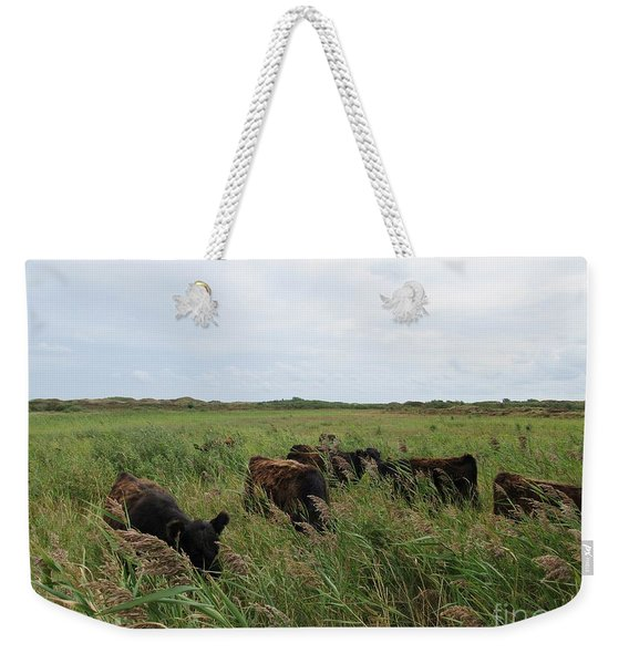 Galloway Cows On Texel North Holland Weekender Tote Bag