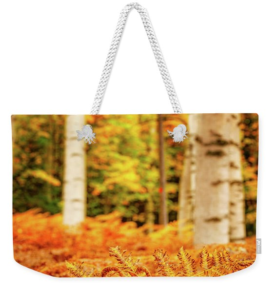 Weekender Tote Bag featuring the photograph Golden Ferns In The Birch Glade by Jeff Sinon