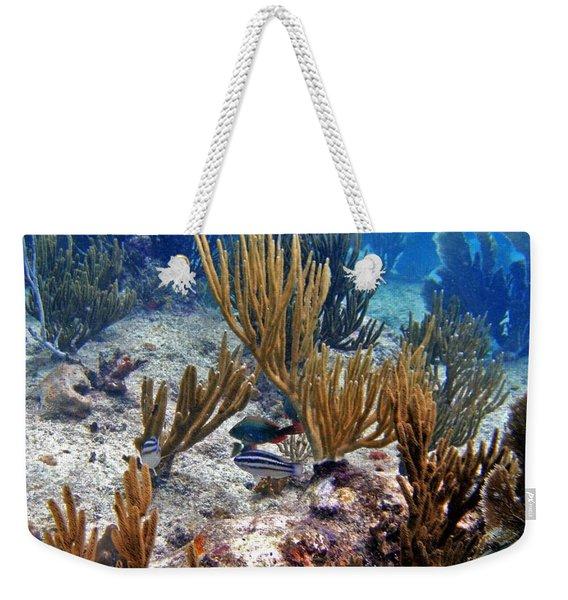 Gorgonian Parrotfish Weekender Tote Bag