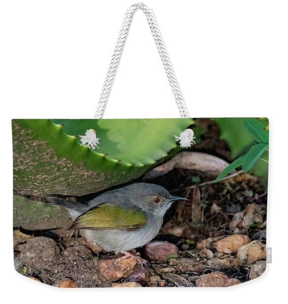 Gray-backed Camaroptera Weekender Tote Bag