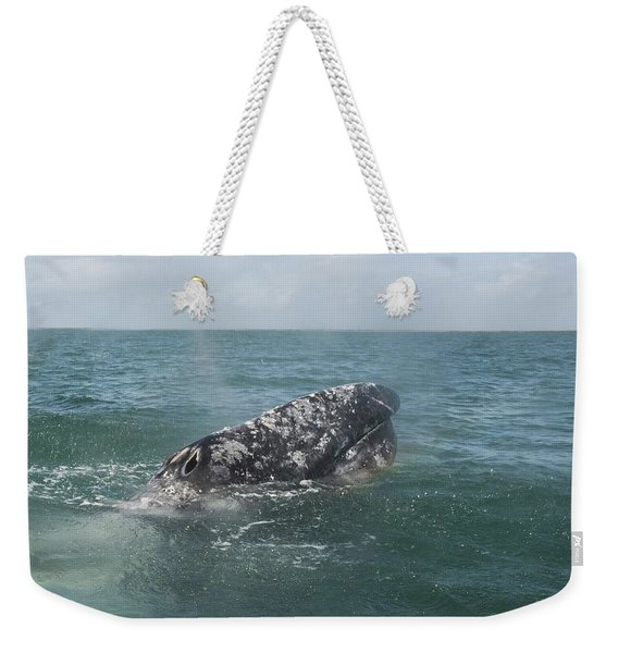 Gray Whale In Bahia Magdalena Weekender Tote Bag