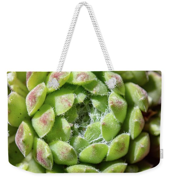 Weekender Tote Bag featuring the photograph Green Sempervivum Top Down Close Up by Scott Lyons