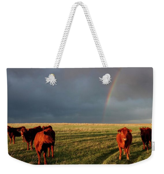 Weekender Tote Bag featuring the photograph Heifers And Rainbow by Rob Graham