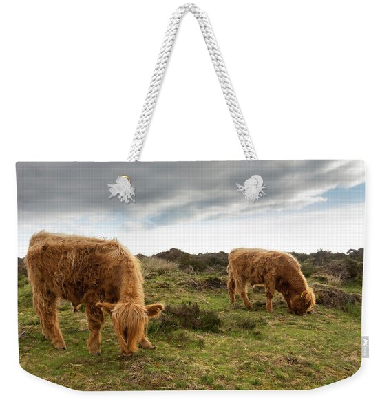 Highland Cattle Feeding At Baslow Edge Weekender Tote Bag
