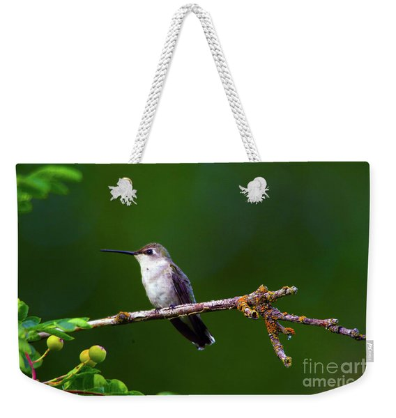 Hummingbird Parking It On A Tree Branch Weekender Tote Bag