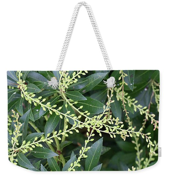 Weekender Tote Bag featuring the photograph Japanese Andromeda by William Selander