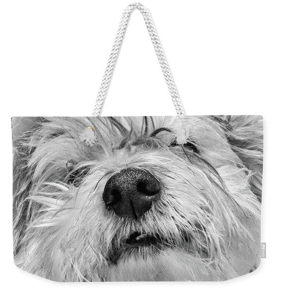 Coton De Tulear Dog Weekender Tote Bag